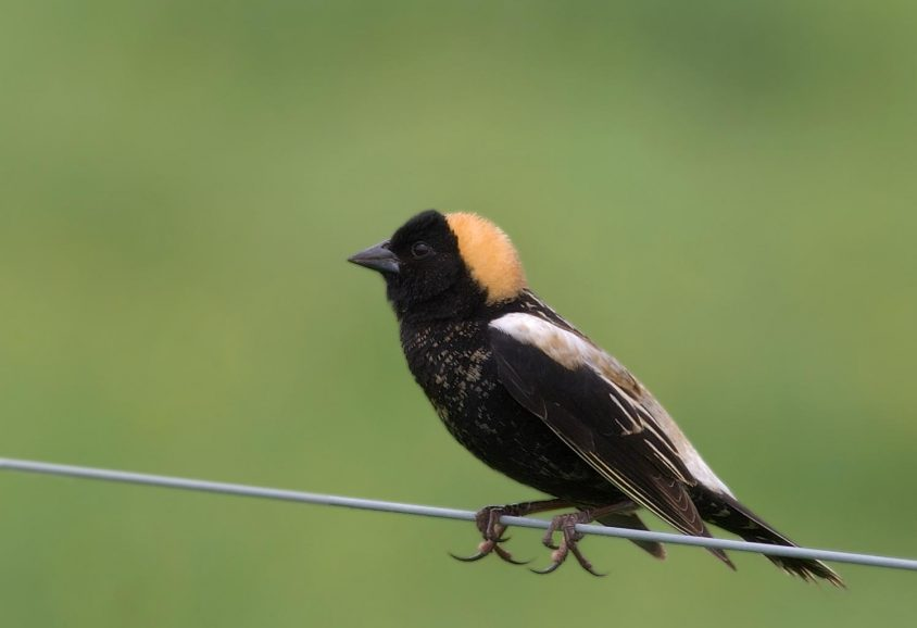 Exemption is extended for farmers who harm threatened birds