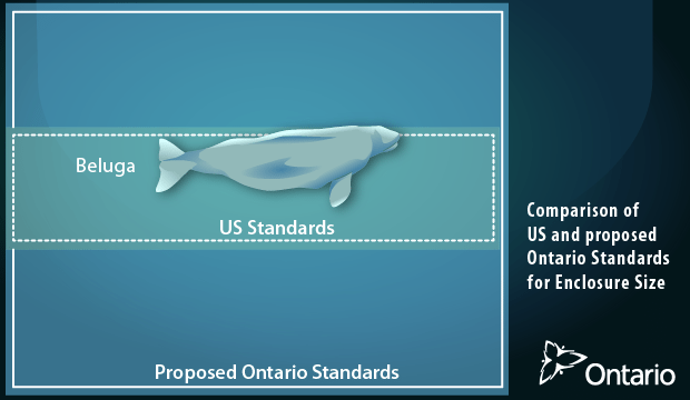 Ontario moving forward with stronger marine mammal laws