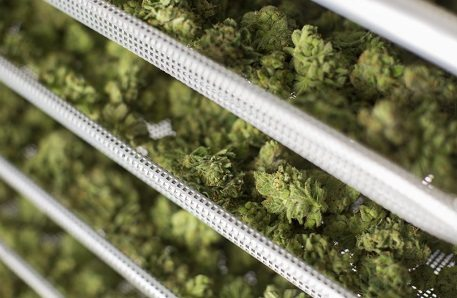 Government tables bill setting out framework for marijuana sales