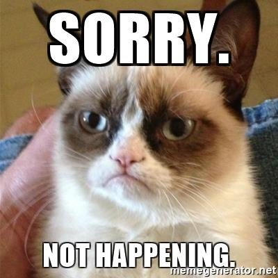 Seen: Guelph mayor uses cat meme to shut down rumours of a run for MPP